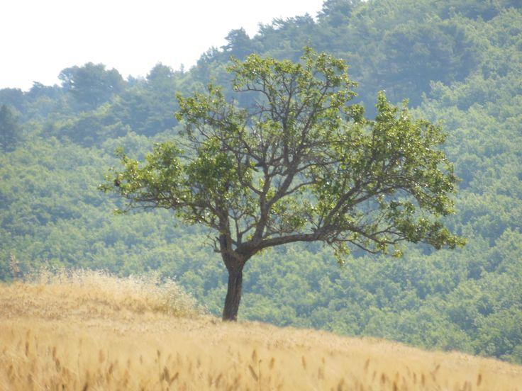 Campo de cebada cerca de Le Castellet.