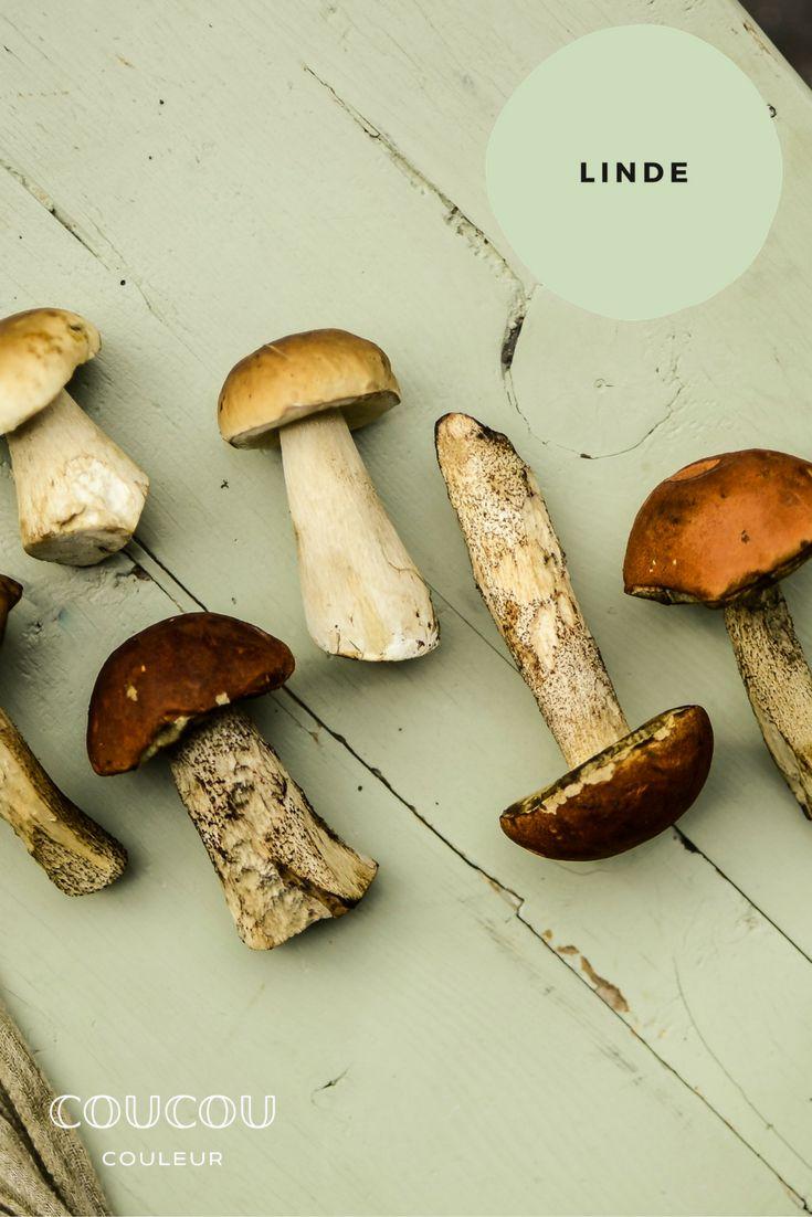 Pilze Sammeln! Der Herbst Und Seine Patina. Hier Auf Einem Bauernstuhl In  LINDE,