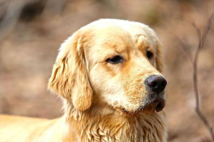 Dog Training Falmouth Maine