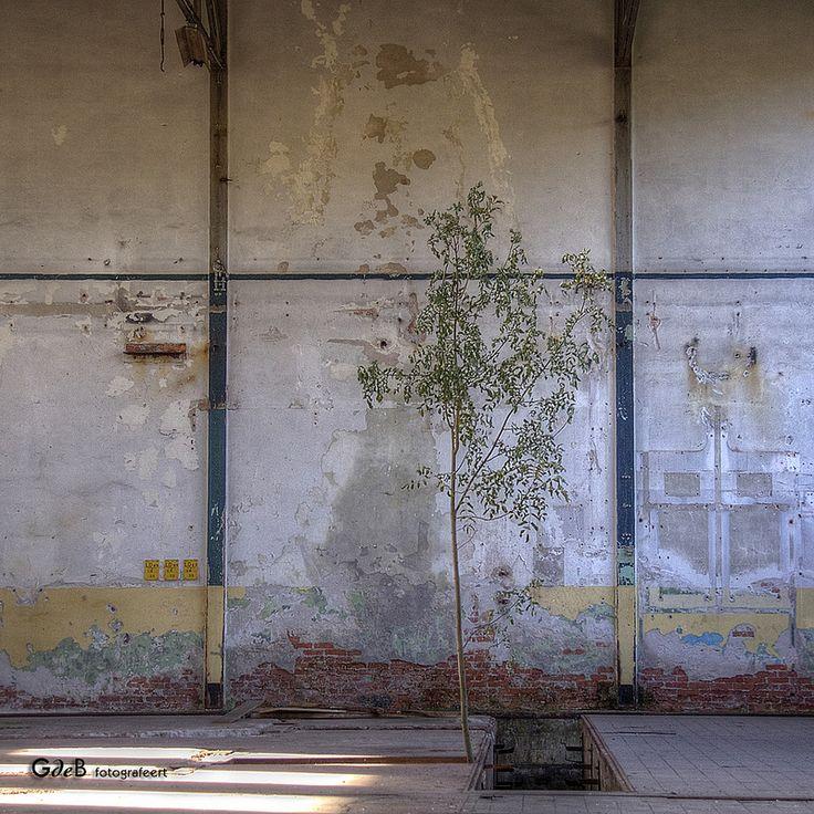the past in pictures III - #GdeBfotografeert
