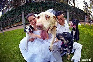 Веселые свадьбы (70 фото) .