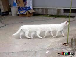 Картинки по запросу приколы про кошек