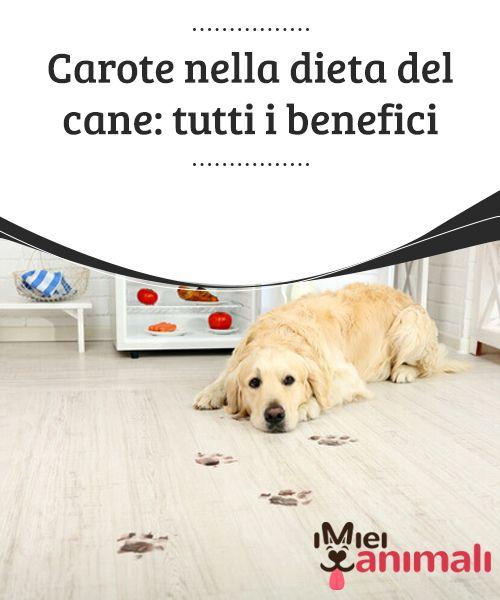 Carote nella dieta del cane: tutti i benefici  Se avete #l'abitudine di premiare il vostro cane ogni volta che obbedisce, invece dei #biscotti o dei #bastoncini industriali, potete dargli delle carote. #Alimentazione