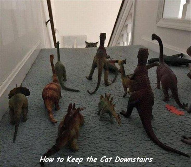 How Can I Keep My Cat Downstairs | Dummies of the Year has the best funny pics, gifs, videos, movie, cosplay, sport, food, memes, cute, fail photos on the internet!