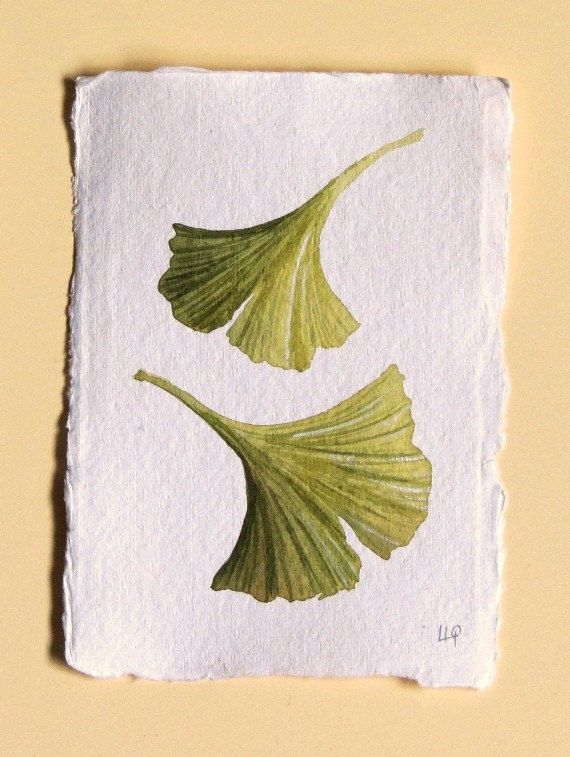 Gingko leaves original watercolour painting study series collection set