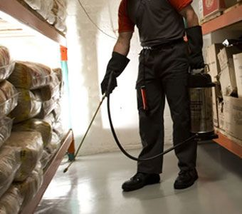 Our pest management program helps us to offer the best treatment for all types of pests which include roaches, termites, spiders, bees, rodents, wood beetles, etc.