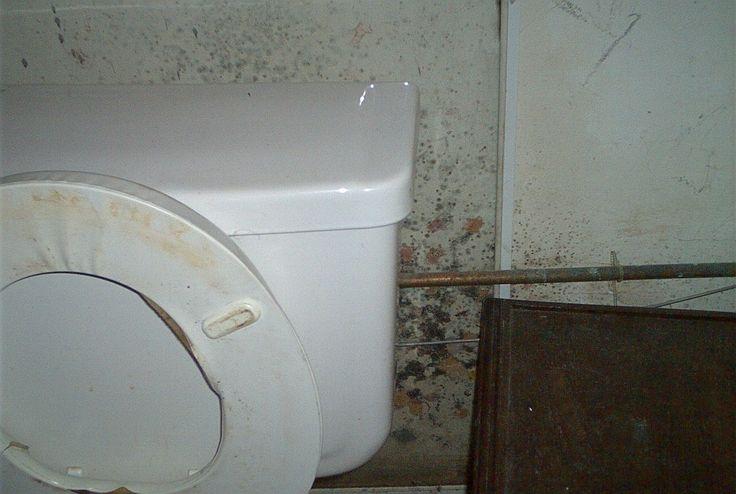 Bathroom Mold Health Effects