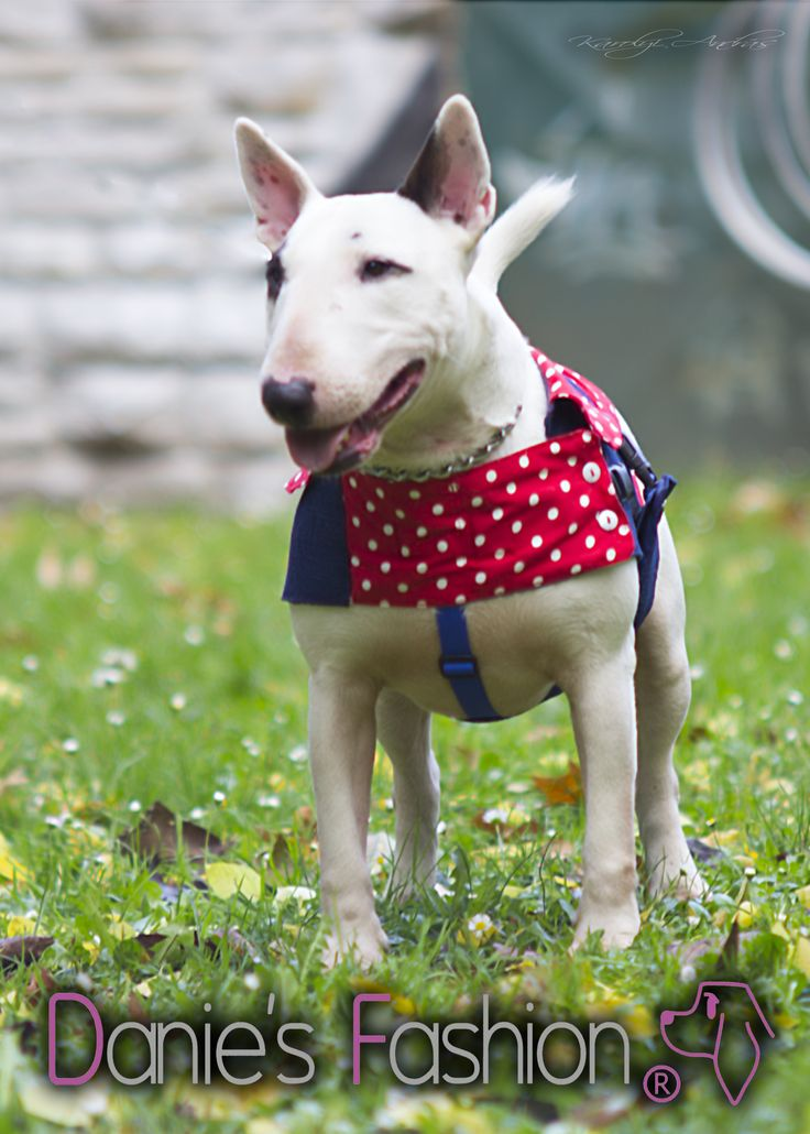 Dog denim vest with shirt http://daniesfashion.com/