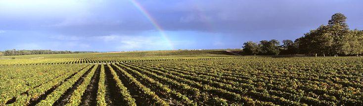 Vins de Saint Julien - Lavinia