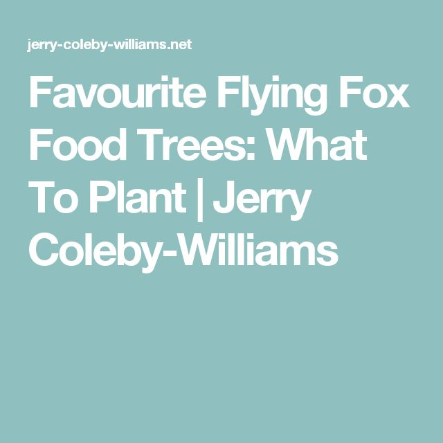 Favourite Flying Fox Food Trees: What To Plant  | Jerry Coleby-Williams