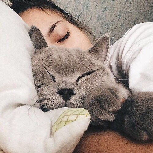 I wanna get a cat that will snuggle in bed with me at night <3