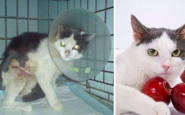 Questi gatti sono stati abbandonati al loro destino, prima e dopo il salvataggio I nostri animali domestici entrano nella nostra vita e ci cambiano per sempre con il loro adorabile affetto. Ma questa è una strada a doppio senso. Loro dipendono da noi, hanno costante bisogno di ci #animali #gatti #salvataggio