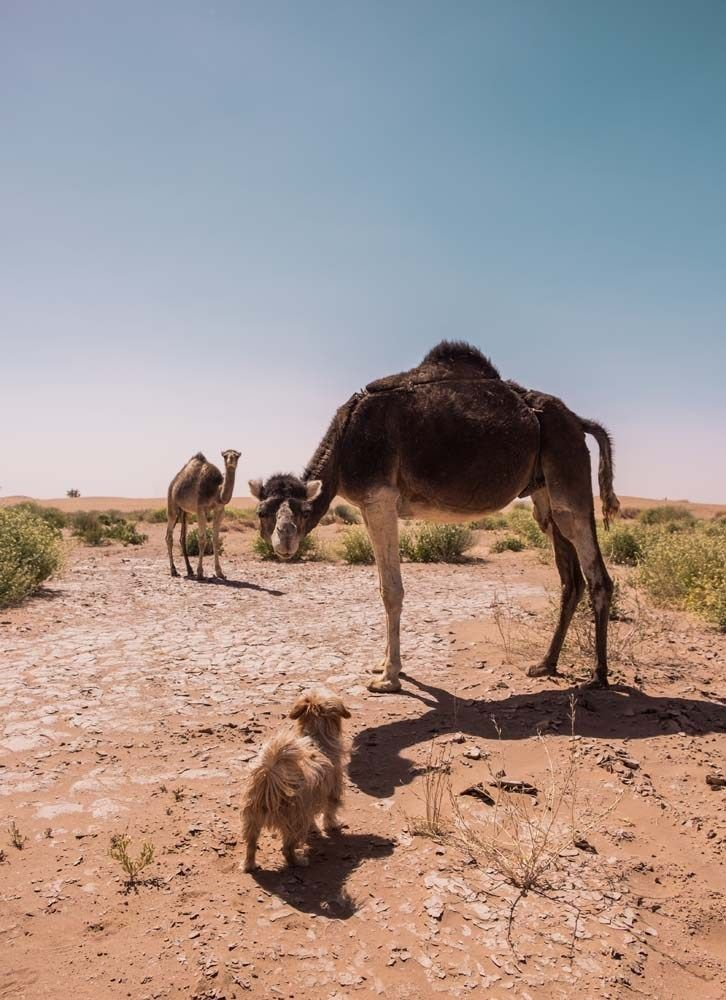 Nézd Furia a Marrakech Magyarul