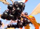 19 Amazing Benefits U&ses Of Acai Berries (Karvandha) For Skin, Hair And Health