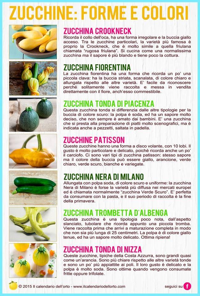 Zucchine: forme e colori