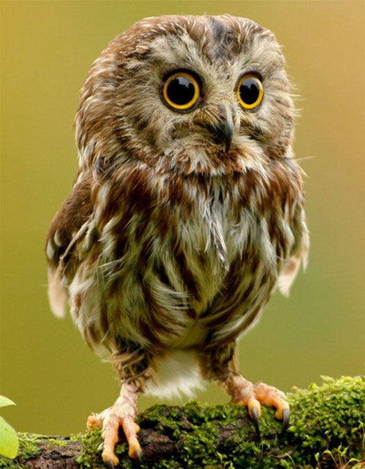 Google Image Result for http://www.geekfill.com/wp-content/uploads/2011/08/cute-owl.jpg