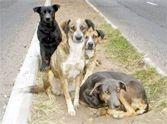 Stray Dogs Save Child From Attempted Rape; They Were Angels From God!