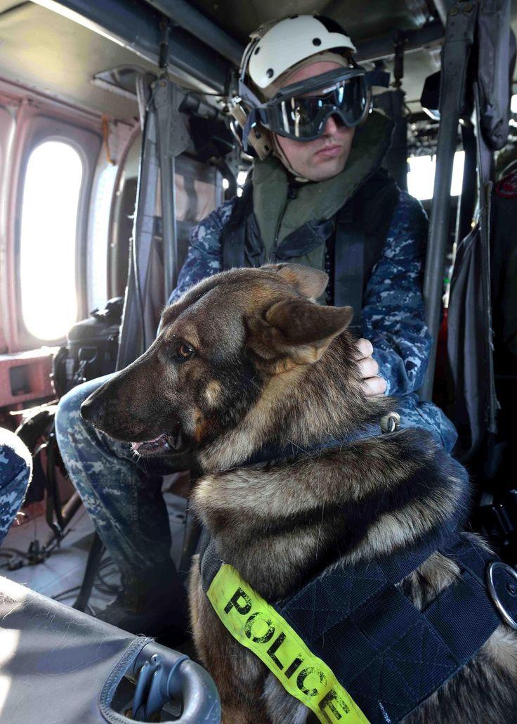 Police dog with handler German Shepherds Pinterest