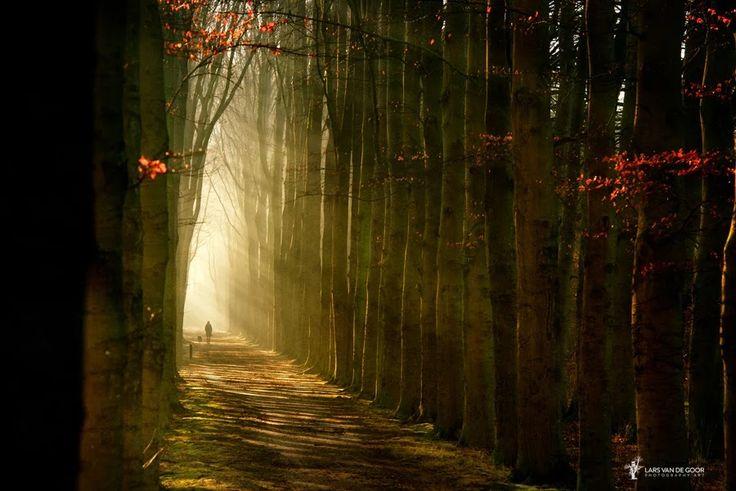 Фото: ©Lars van de Goor Камера#NIKOND800 Фокусное расстояние 135 mm Скорость затвора 1/125 s Апертура f/7.1 ISO 200 #фотоидеи #ландшафтная_фотография #пейзаж #лес #весна