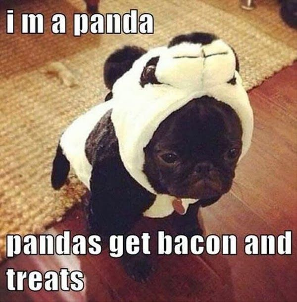 That is soooo funny I am really laughing at the dogs  face and the costume