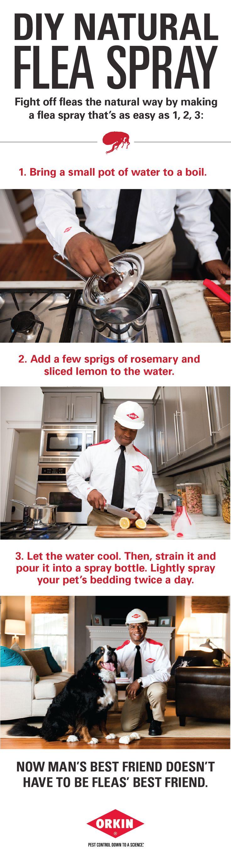 Make Your Own #DIY Flea Spray