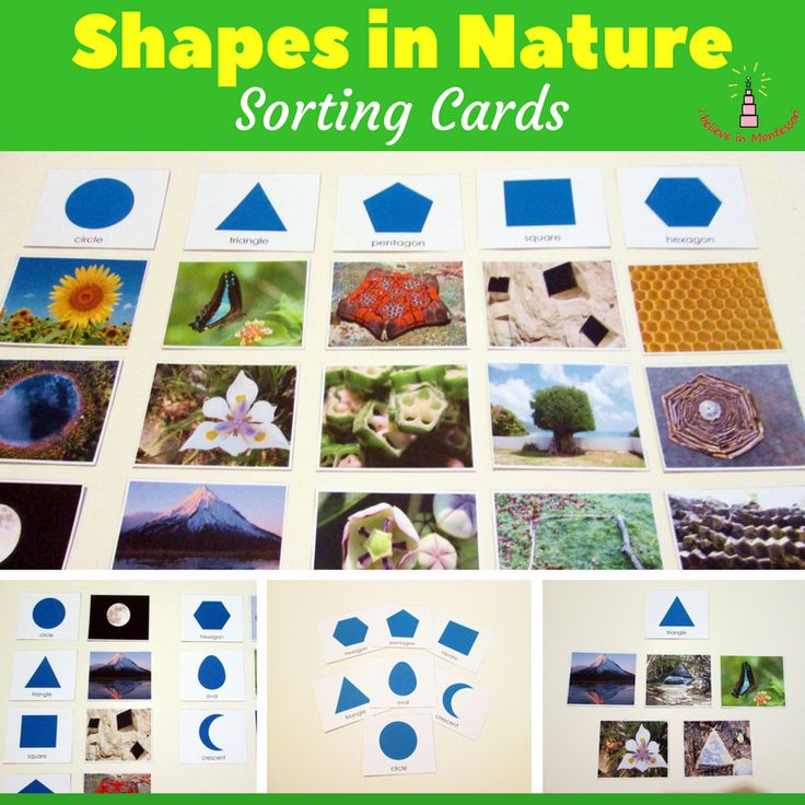 Shapes in Nature Montessori Sorting Cards Printrables