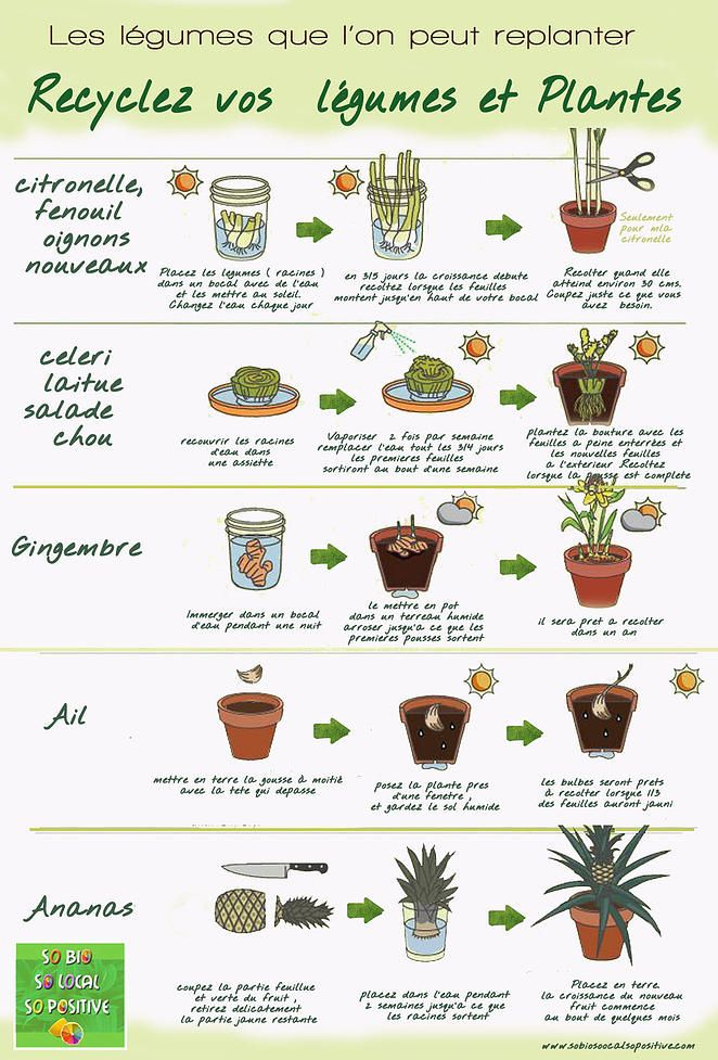 So Bio, So Local, So Positive | Recyclez même vos légumes ! Découvrez ceux que l'on peut replanter