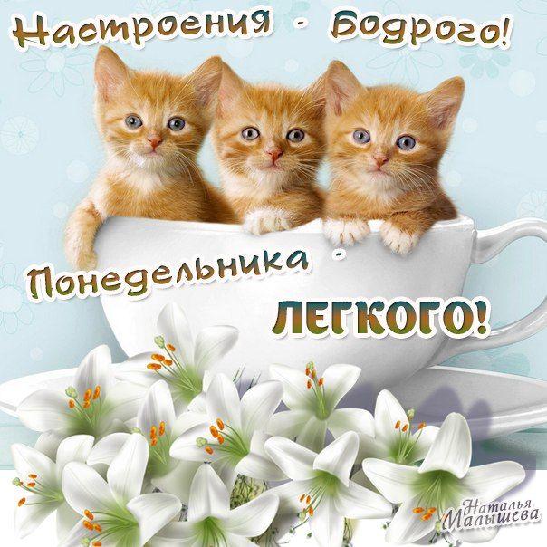 картинки с котиками доброе утро и хорошего понедельника избегать глинистых