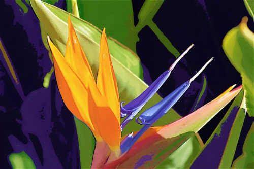 1.  Cada zona se pinta con un color uniforme. La mezcla de los colores se realiza siempre sobre la paleta y nunca sobre el papel; ...