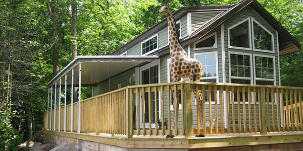 ...Stay at Noah's Ark where a regal giraffe will watch over you or...