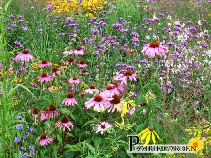 Marvelous Prairie garden Is een onderhoudsarm beplantingssysteem van lageschaar NL Greenlabel