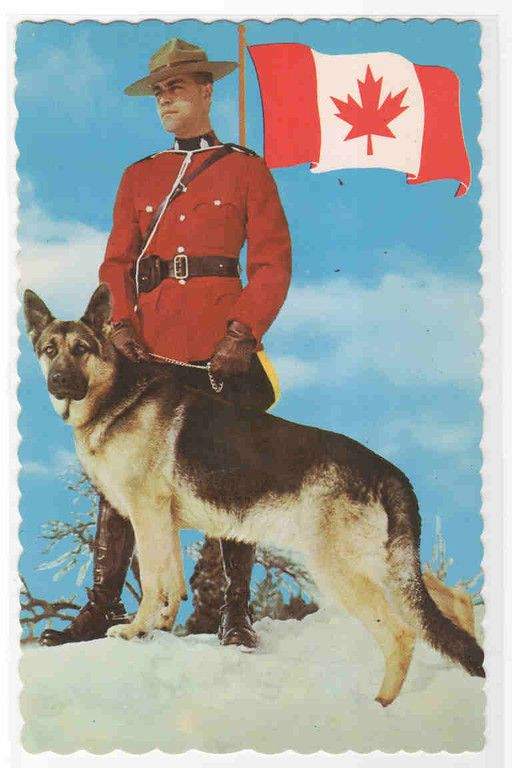 Canadian Mountie RCMP Dog Handler Police Canada postcard - bidStart (item 33599917 in Postcards... Other / Unsorted)