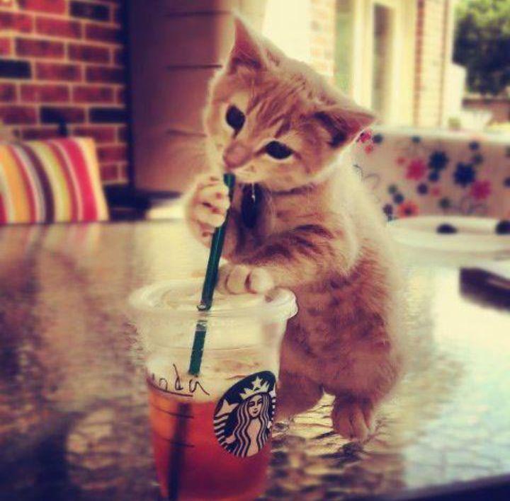 Cat # cute