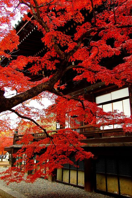 Beautiful autumn colors in Shinnyo-DO, Kyoto, #Japan