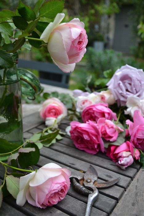 ***: Pink Roses, Gardens, Rose Garden, Flowers, Colorful Roses, Cut Roses, Flower