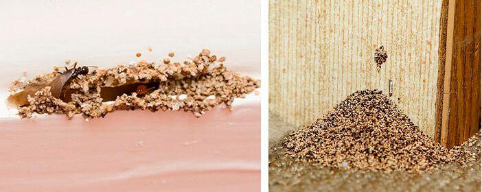 how to kill drywood termites