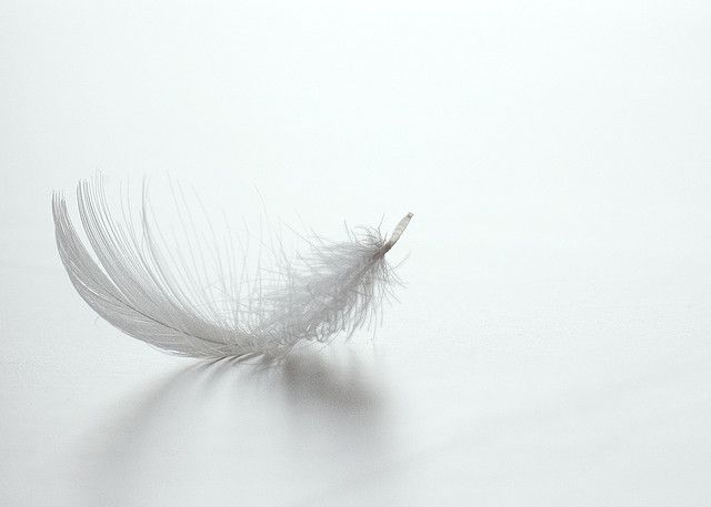 Color Blanco - White!!! Feather