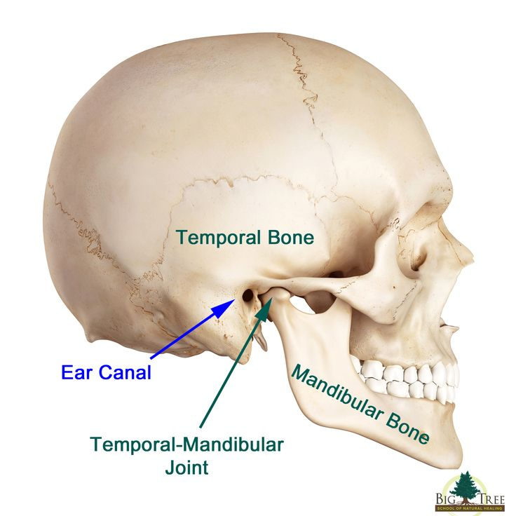 image of Temporal Mandibular Joint http://reviewscircle.com/health-fitness/dental-health/natural-teeth-whitening/