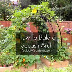 How to build a squash arch, this is an easy DIY project that anyone can do! | http://GetBusyGardening.com