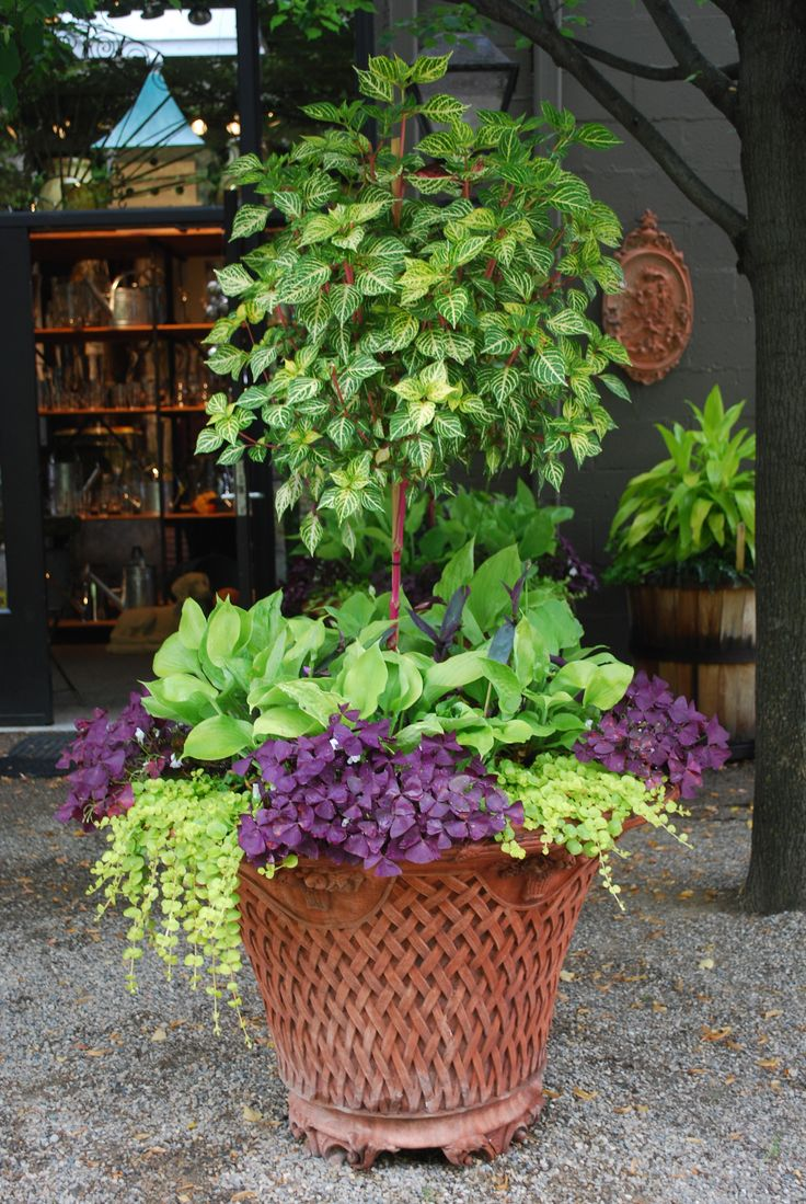 35 best gray leaves images on pinterest | garden container, potted