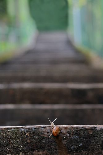 "A lot of Stairs to climb (by Pierpaolo.)  ""O snail Climb Mount Fuji But slowly, slowly!""  — Kobayashi Issa"