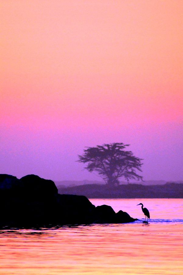 Great Egret on the Bay by ~whisperfae on deviantART