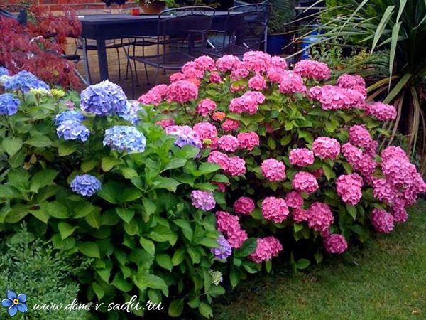 Какие цветы посадить в тени. 15 названий цветов, которые любят тень. | Частный…
