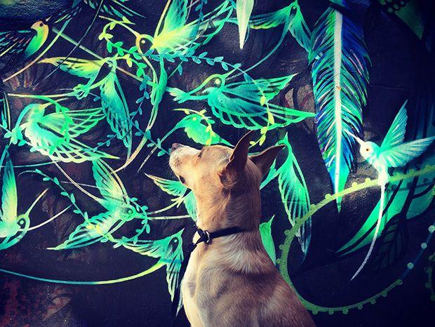 Cido e a Cidade: um cachorro vira-lata adotado super simpático e muita arte de…