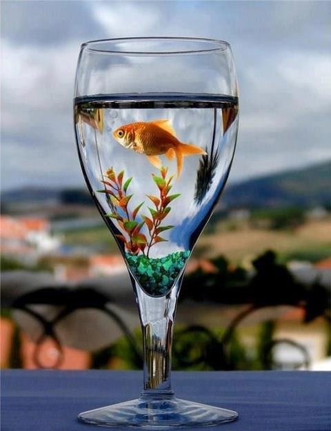 Wedding center piece for a beach theme with maybe a small ocean fish in it instead of a goldfish.