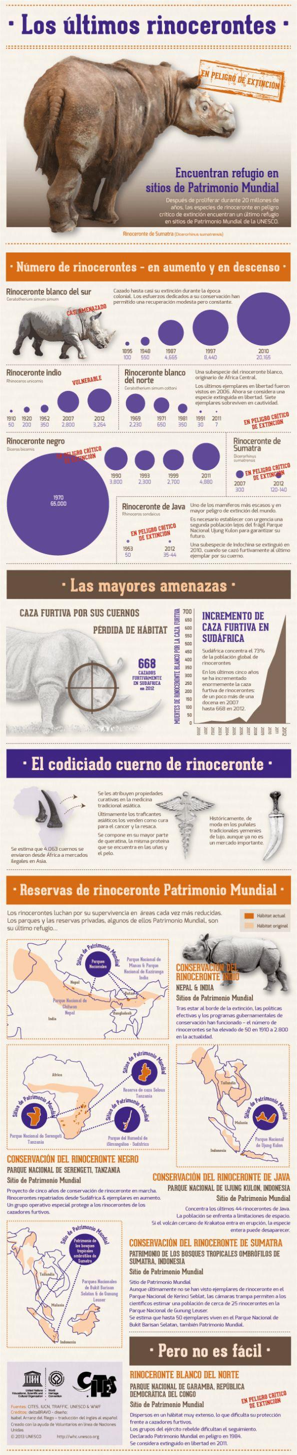 Los últimos rinocerontes #infografia