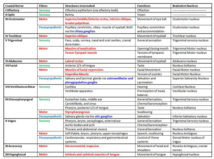 Cranial Nerves | free medical student revision notes