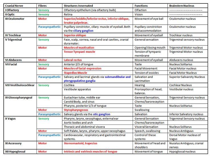 25+ best ideas about cranial nerves on pinterest | cranial nerves, Human Body