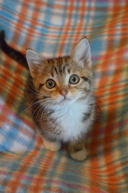 Bibi Winkler: an extra-itty itty bitty kitty! by *lalalaurie, via Flickr