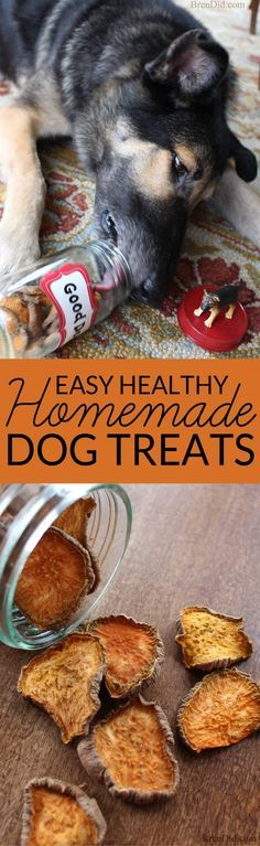 Make your own easy homemade dog treats with this one ingredient tutorial and feed your pet healthy homemade dog treats.